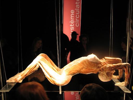 (グロ注意)女の子の解剖・内臓画像 8体目fc2>1本 YouTube動画>18本 ->画像>189枚
