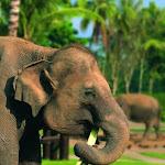 Бали. Сафари на слонах 3.jpg