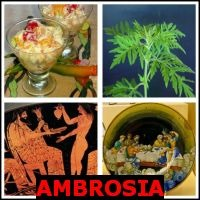 AMBROSIA- Whats The Word Answers