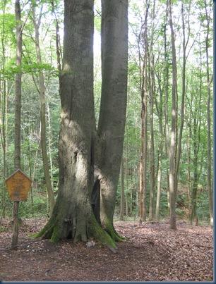 liebesbaum 005