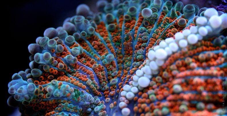 corals-6