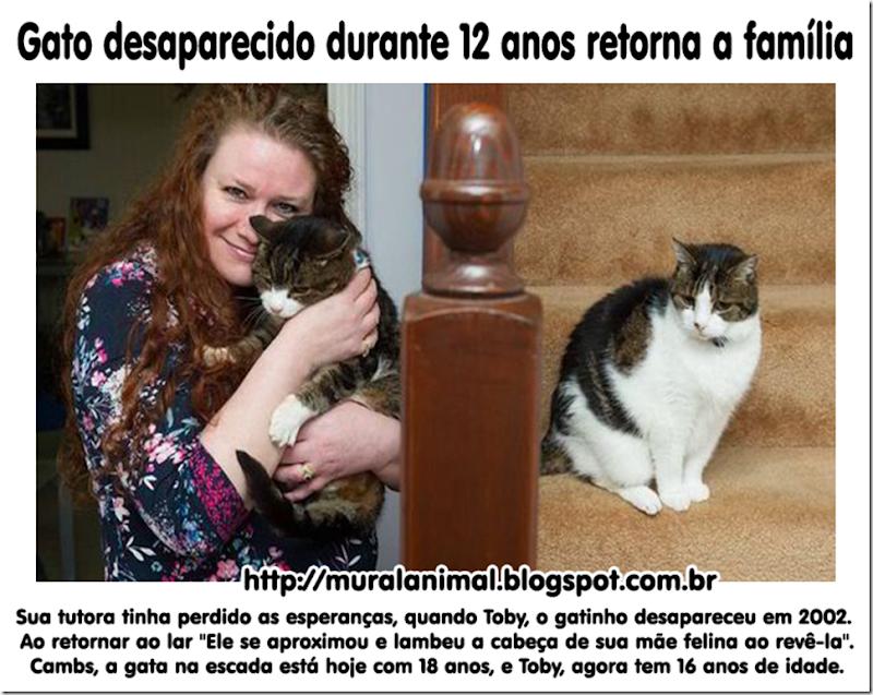 gato_reaparece_depois_12_an