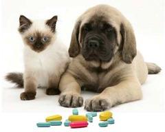 remedios cao gato