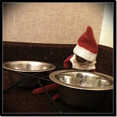 Dog Food Elf