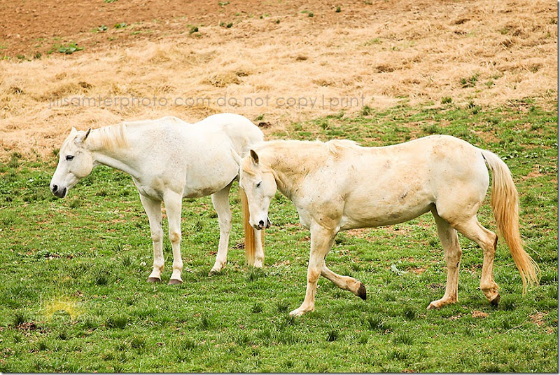 horses-5510