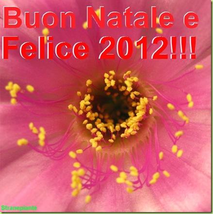 Buonanatale e felice 2012 - Echinopsis pentlandii
