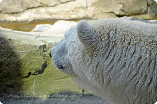 Wremen 20zwölf Tag 6 Zoo am Meer - Eisbär (4)