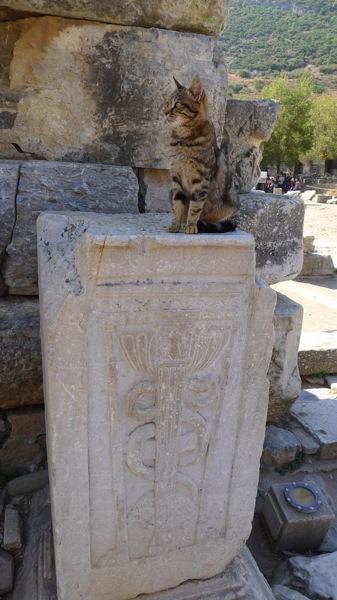 Cats of Ephesus