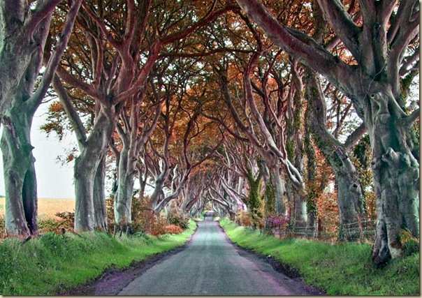 The-dark-hedges-005