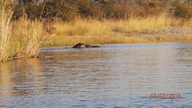 Kwando River 055.JPG