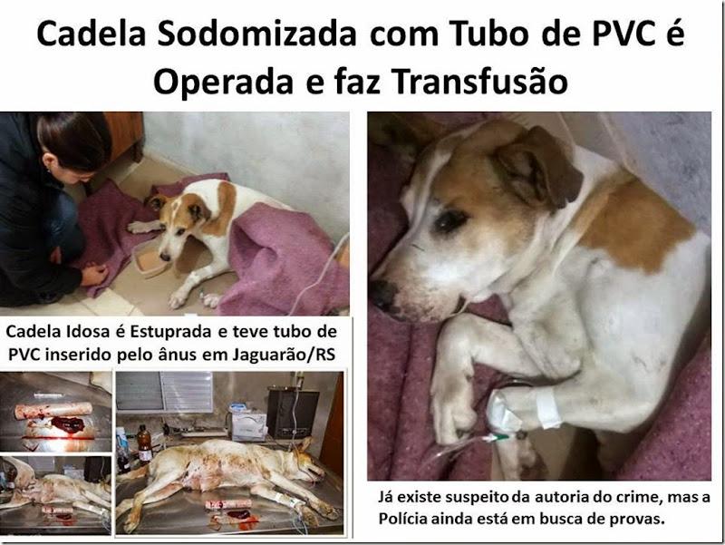 Cadela Sodomizada com Tubo de PVC é Operada