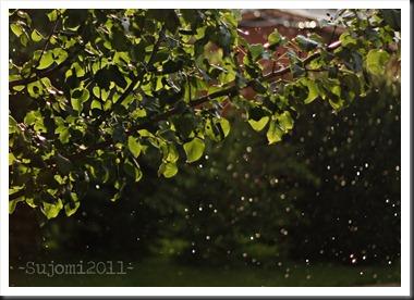 2011 06 21 _MG_2889w