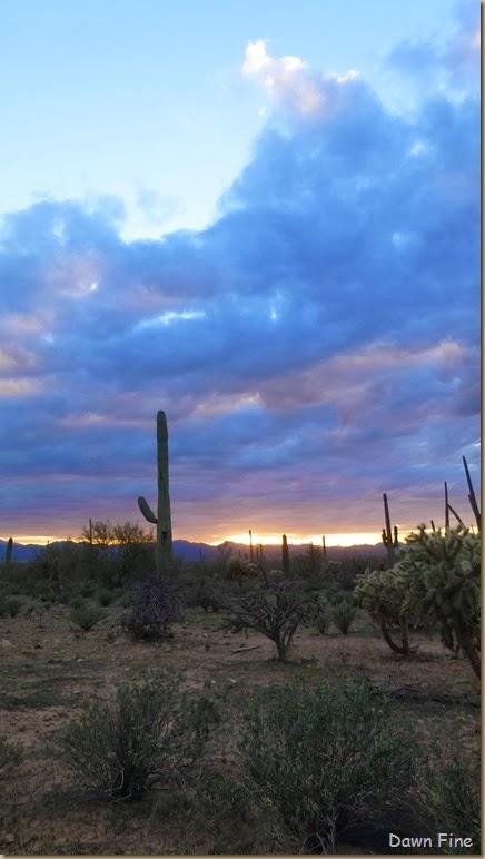 Saguaro NP West_103