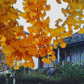 rustic autumn by Ruy Lopes - City,  Street & Park  Street Scenes ( folhas amarelas casa antiga )