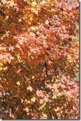 2014-10-26 Oct 26 011