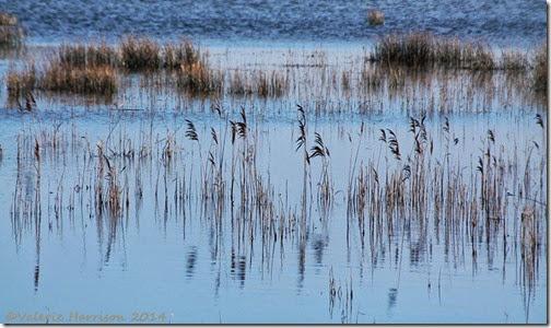 76-reeds