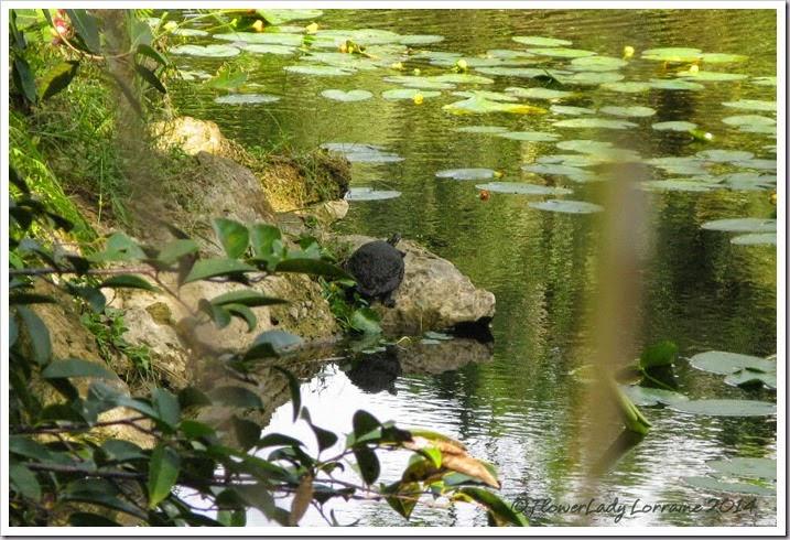 11-20-turtle