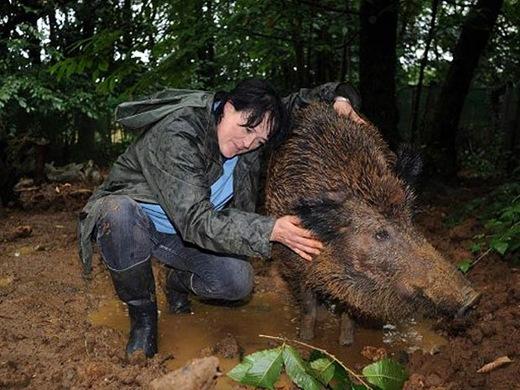 Francesa é multada em 200 euros por criar porca selvagem no quintal