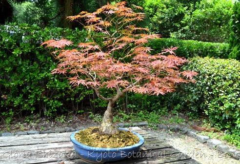 Glória Ishizaka -   Kyoto Botanical Garden 2012 - 58