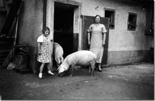 pig of renate