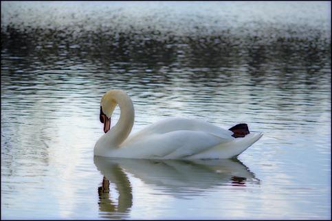 Swan Nemacolin2