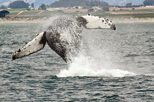 Whale Watching_066