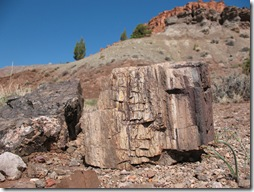 2012-04-15 Petrified Wood, Fry Canyon, UT (26)