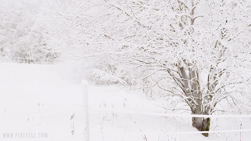 3-winter