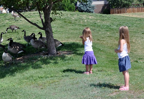 2012-07-15 girls geese