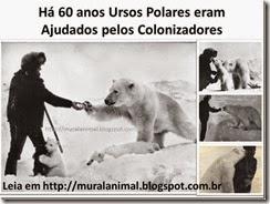 ursos_colonizadores