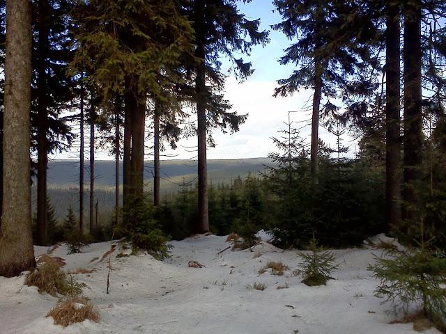 Sníh v lese nedaleko vrcholu Špičák