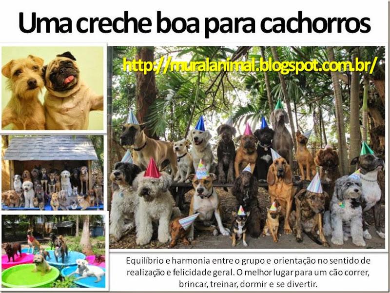 creche_cachorro