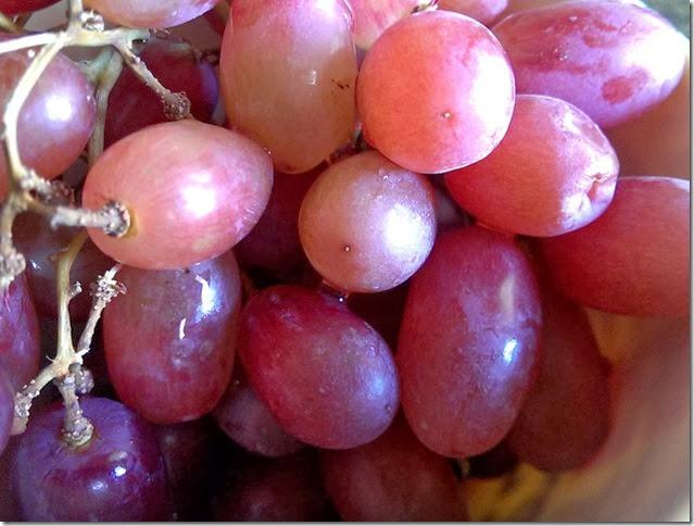 grapes-public-domain-pictures-1 (2313)