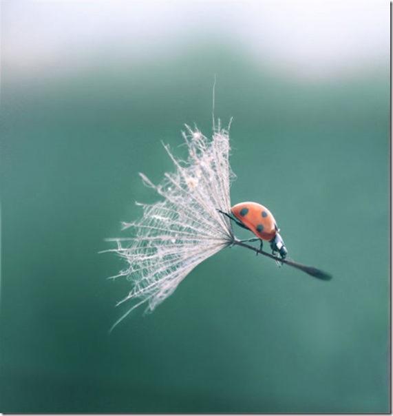 perfect-timing-photos-24