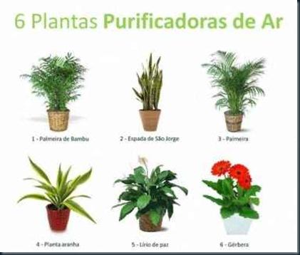 plantas-purificadoras-de-ar
