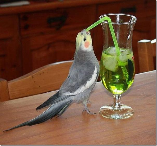 Água que passarinho bebe