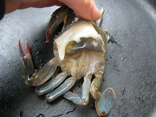Lift each point of the crabs soft shell and cut away the feathery looking lungs from underneath