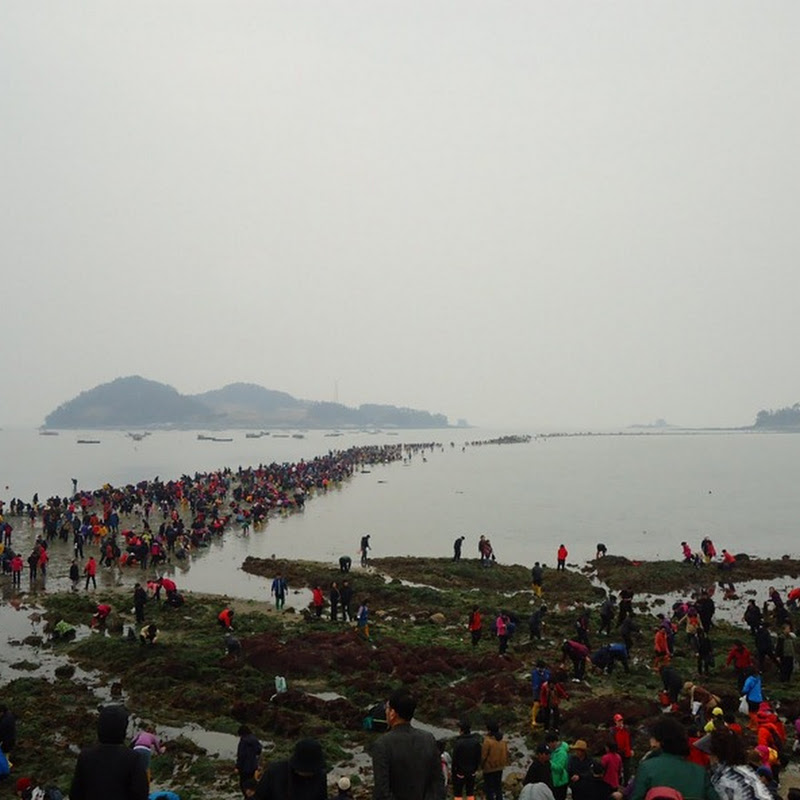 Parting of the Sea in Jindo