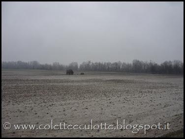 Passeggiata sull'argine dopo la piena - Padulle - 11 gennaio 2014 (10)