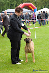 20100513-Bullmastiff-Clubmatch_30938.jpg