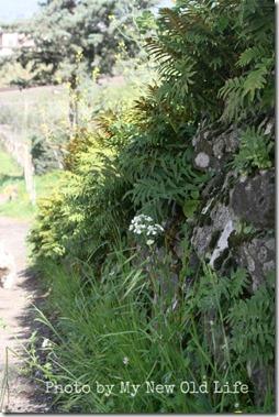 La Selva i fiori 12