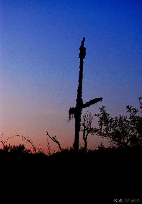 13. cactus ribs dark-kab