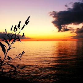 by Betty Doerksen - Landscapes Sunsets & Sunrises ( water, contrast, plant, sky, silhouette, twilight, dark, cloud, lake, night, dusk )