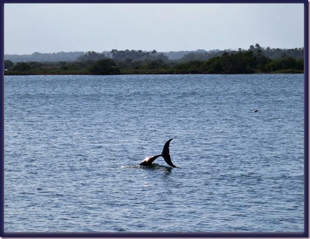 DolphinIMG_0967