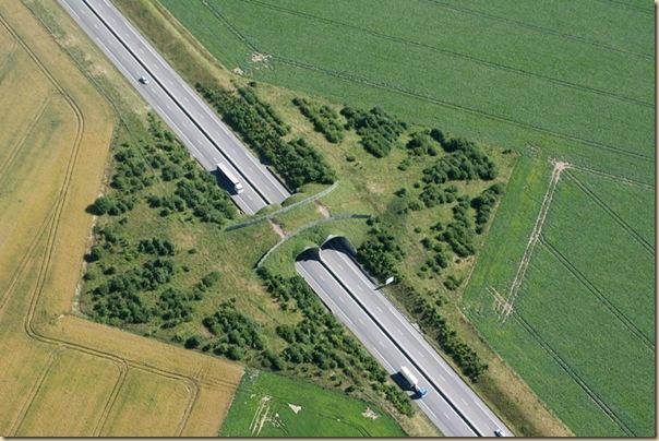 Ponts pour animaux - passages à faune (23)