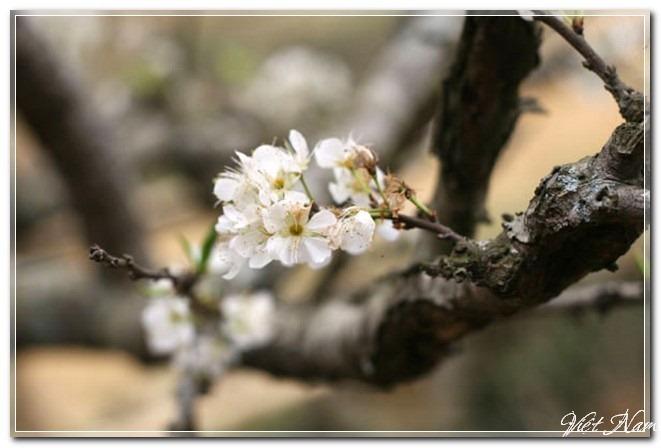 Xuân trên rẻo cao Tây Bắc