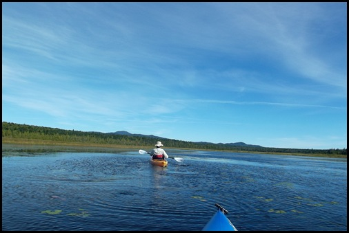 West Shirley Bog 069