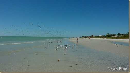 Sanibel Shell and birds_180