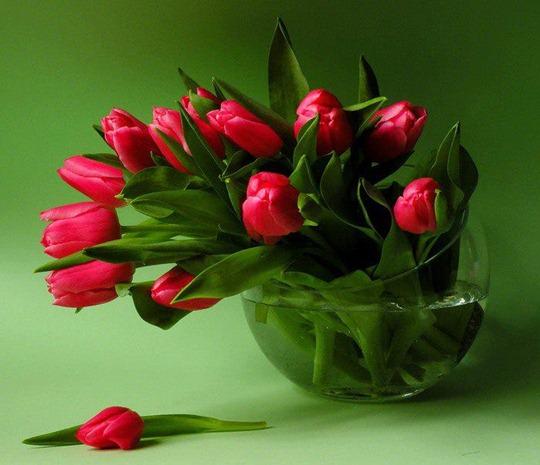 buque-tulipas