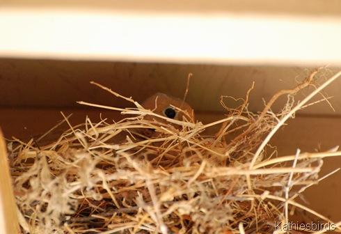 22. bird nest-kab